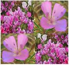 CLARKIA GODETIA DWARF LILAC Flower Seeds Clarkia amoena ~ Color: purple