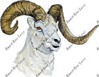 Ram Head Sticker Decal Quality Wildlife Outdoor Nature Boating Camp Woods Hunt