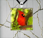 BIRD RED CARDINAL MALE IN GREE TREE SQUARE PENDANT NECKLACE -djh8X