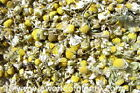 Chamomile Flowers Whole – Soap - Tub Tea -  Potpourri - Sachet 4-6-8-12 oz
