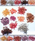 Внешний вид - Pressed Flower Collections Organic Natural Dried Flowers DIY ART Floral Decors