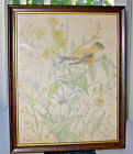 Original 1981 BIRD and FLOWERS Colored Pencil Drawing Signed by Artist Framed
