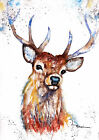 Original Watercolour Stag Print by Artist Be Coventry wildlife art