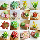 Home Garden - Artificial Succulents Plant Garden Miniature Fake Cactus DIY Home Floral Decor