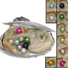 Colorful Individual Wrapped Bulk Akoya Oysters with Large Pearls Round Freshwate