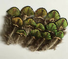 10-100 PCS 2 to 3 inches. real natural peacock feathers plumage wedding party