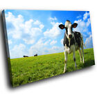 A042 Green Cow Field  Farm Blue New Animal Canvas Art Picture Prints