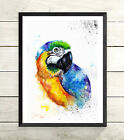 NEW, Parrot,Sale,Original ,Watercolour ,Print,Card, Gift,Wildlife,Animal,Art,
