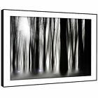 SC348 Black White Trees Nature Landscape Framed Wall Art Large Picture Prints
