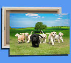 Box Canvas: Cute Labrador Puppy Dogs In A Field - Various Sizes - Ready To Hang