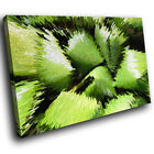 ZAB844 Green Black Funky Modern Canvas Abstract Home Wall Art Picture Prints