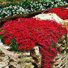 FD35 0130 1bag 100pcs Rare Creeping Thyme Seeds Plant Flower Seeds Landscaping