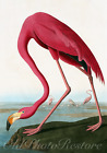 VINTAGE FLAMINGO BIRD FINE ART PRINT by JOHN JAMES AUDUBON. HIGHEST QUALITY.