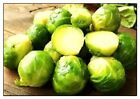 Long Island Brussels Sprouts Seeds   NON-GMO   Heirloom   Fresh Garden Seeds