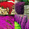 10/20pcs Creeping Thyme Seeds Multi color Rock Cress Aromatic Ground Cover Charm