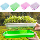 Seed Sprouters Trays Germination Tray 2-layer Micro Greens Seedling Set Duable