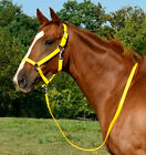 ** ANY SIZE *** YELLOW Horse HALTER & LEAD for Turnout Show BETA BIOTHANE