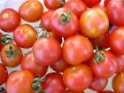 Tomato Seeds - Large Red Cherry