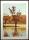 "Scott Nellis ""Summer's End"" Hand Signed Fine Art Serigraph, trees riverside, OBO"