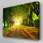 C198 Green Tree Sunset Path Canvas Wall Art Ready to Hang Picture Print