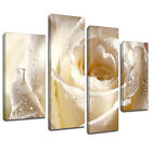 MFL031 Glistening White Rose Canvas Wall Art Multi Panel Split Picture Print
