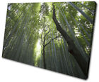 Forest Trees Nature Landscapes SINGLE CANVAS WALL ART Picture Print