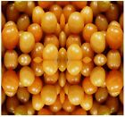 GROUND CHERRY SEEDS - CAPE GOOSEBERRY - FOR SAUCES & PIE - physalis family