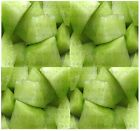 HONEY DEW GREEN MELON  CANTALOUPE seeds - HIGH in A  B  and C Vitamins