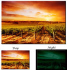 Vineyard Sunset Winery Canvas Art Print - Glow in the Dark Canvas Art Print