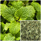 Lemon Balm, organic, soap making supplies, herbal extracts.