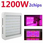 1200W 1000W 600W LED Grow Light Panel for Medical Indoor Plant Veg Full Spectrum