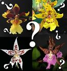 Odonts__RANDOM__huge variety EXTREMELY EZ GROW beginners WANTED: ORCHID RESCUERS