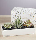 Happy Birthday Succulents by Lula's Garden-Three Sizes Gift Present Easy Care