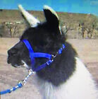 Cria Llama Halter Rocky Mountain Llamas Nylon Weanling best fitting many colors