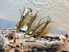 Peacock Clouser Minnow Fly Fishing Flies (3 pack) SIZES 2 or 4