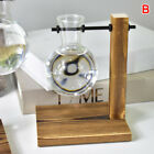 Table Desk Bulb Glass Hydroponic Vase Flower Plant Pot with Wooden Tray Decor