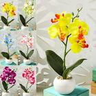 Silk Artificial Fake Orchid Flower Potted Plant Bonsai Party/garden/home Decor