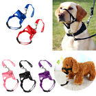 Dog Muzzle Strap Halti Head Collar Stops Training Nose Reigns Pet Pulling Halter