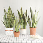 Artificial Snake Plant Fake Flower Simulation Succulent Agave Home Floral Decor