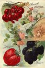 Reids 2 Vintage Seed Cover Picture Art Print Canvas Poster A4 A3 A2 A1