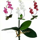 Artificial Double Orchid Phalenopsis silk flower stem plant