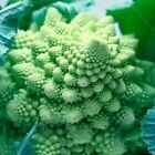 Cauliflower Seeds- Romanesco Natalino -  Classic pine-cone shape - Free Ship!!!
