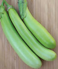 Lousiana Long Green Eggplant  Seeds  Excellent yields of slender 9