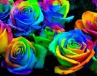25X Rare Multi-Colours Rainbow Rose Flower Seeds Garden Plant