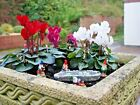 MINIATURE GARDEN GNOMES FOR FAIRY GARDENS CHOICE OF TWO SETS - NEW