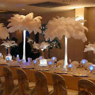 New Wholesale 10 PCS Natural Ostrich Feathers For Wedding Prom Centerpiece