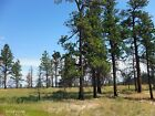20 ACRES MUSSELSHELL COUNTY MONTANA TREES VIEWS CASH SALE NO RESERVE!!