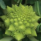 Veronica F1 Cauliflower Seeds - Beautiful & Tasty Swirling chartreuse spires!!!