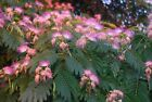 Grow Your Own Trees and Shrubs! 10 Fresh Cuttings Over 70 Varieties