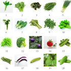 Vegetables Plant Seeds Home Garden Vegetable Fruit Seed Easy Grow Plant Decor